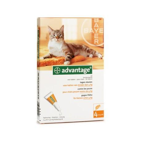 Advantage flea medication for cats