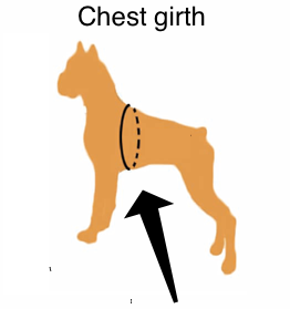 Image result for dog chest circumference measurement