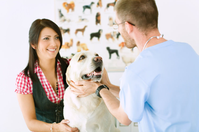 Pet advice and answers form vet